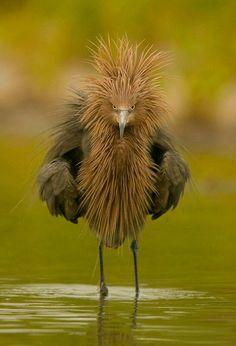 was bist du den für ein komischer vogel?