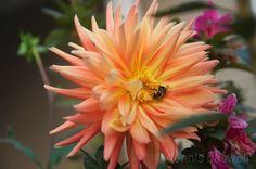 flamingo colored flower by lolenslooker.deviantart.com