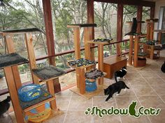 Cats living in and around Austin, Texas have their very own resource for building some awesome cat climbing structures! David Murphy, The Cat Carpenter, designs and builds cat trees and custom cat climbing shelves that would make any cat feel like. Cat Climbing Shelves, Cat Fence, Outdoor Cat Enclosure, Diy Cat Tree, Cat Cages, Cat Room, Outdoor Cats, Pet Furniture, Space Cat