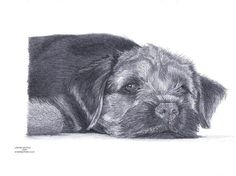 Border Terrier dog Limited Edition art drawing print signed by UK artist Pictures To Paint, Print Pictures, Best Dog Breeds, Best Dogs, Drawing Borders, Terrier Dogs, Terriers, Brown Dog, Art Drawings
