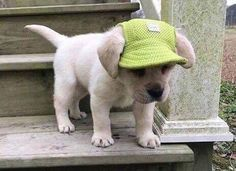 Funny & Cute Dog Pictures #cutedogs