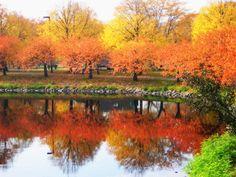 Fall - Boston, Massachusetts