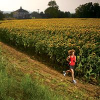 I want to run in a sunflower field... #running