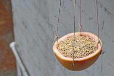 DIY: A Grapefruit Birdfeeder for Feathered Friends Gardenista