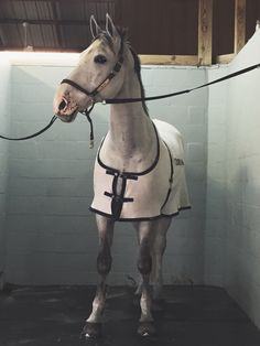 lanterns-and-stars:  hit-the-dirt-and-get-back-on:  bigcity-dr3ams:  Just a little obsessed with him  I would be too.  Beautiful horse!