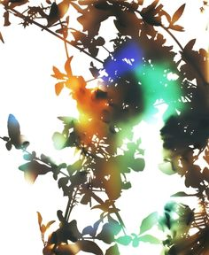 James Welling  Flower 21, 2006  Chromogenic photogram, 37 x46 in.