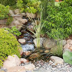 Add natural beauty to your water garden with the top-performing varieties. Diy Water Fountain, Diy Garden Fountains, Water Garden Plants, Rain Lily, Pitcher Plant, How To Attract Hummingbirds, Garden Edging, Aquatic Plants, Garden Care