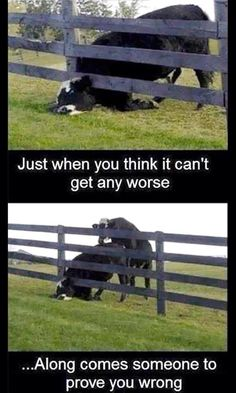 I Feel So Bad For This Cow... But I Also Can Not Stop Laughing... It's so True. ♡ Too Funny.