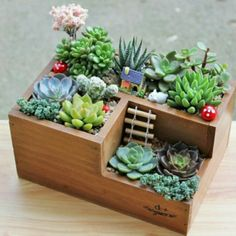 Multifunctional Wooden Desktop Office Supply Caddy and Succulent Planter Best Picture For Garden Planters bench For Your Taste You are looking for somet Cacti And Succulents, Planting Succulents, Planting Flowers, Cactus Planters, Succulents Wallpaper, Succulents Drawing, Potted Flowers, Home Flowers, Succulents In Containers