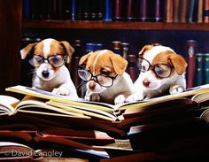 """Three puppies wearing glasses while staring at an open book, """"According to this, we can't read!"""""""