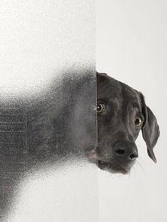 Viens petit chien, pour un câlin...William Wegman, 2008