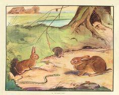 The Enid Blyton Nature Readers (No. 23) by Enid Blyton, Eileen A. Soper illustration
