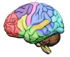 Left brain dominant or right brain dominant.. How do it affect the studies? | The Study Abroad Blog