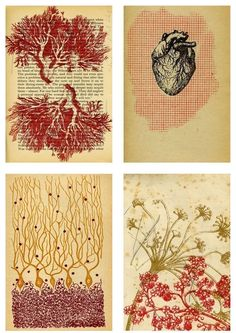 print idea, printmaking, anatomical heart, coral, natural, colour, plant