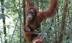 Borneo Wildlife Discoverer, a 15 day tour from Kuching to Bako National Park, Gunung Mulu NP and 6 destinations. Gunung Mulu National Park, Kuching, Adventure Tours, Borneo, Day Tours, Habitats, National Parks, Wildlife, Voyage