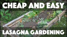 """Today I build some a free raised bed and use the """"lasagna gardening"""" method to fill it up, AKA """"sheet mulching."""" Sheet mulching / lasagna gardening is an eas. Organic Gardening, Gardening Tips, Lemon Lime Nandina, Dig Gardens, Fountain Grass, Bokashi, Landscape Elements, Starting A Garden, Grow Organic"""