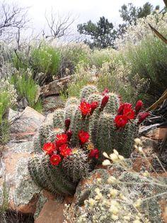 The High Desert - Arizona, the most beautiful dessert on earth...
