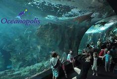 Pour vos prochaines vacances en famille, découvrez notre pack ➡️ Entrée(s) Océanopolis + Nuit(s) à l'hôtel Center #Brest ⬅️  http://www.hotelcenter.com/hotel-pas-cher/185-promotions-parc-oceanopolis-brest.html #Oceanopolis