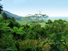 Australia a country of endless possibilities - Cape Trib view