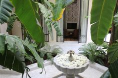 Riad Kheirredine a Marrakech Marrakech, Lifestyle Blog, Plant Leaves, Plants, Planters, Plant, Planting