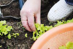 Clematis, Calendar, Gardening, Horticulture, Plant, Lawn And Garden, Life Planner