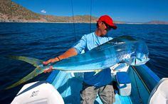 """In Mexico, mahi-mahi are called dorado, or """"the golden one."""" The fish are prized by sport anglers because of their acrobatics and quality of flesh,"""
