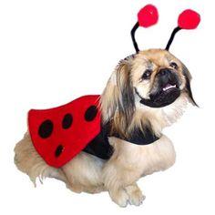 """""""Winged Ladybug"""" Dog Costume"""