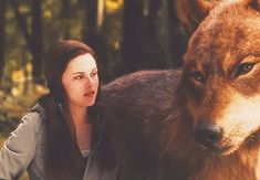 """"""" ✚ WOLF/WEREWOLF GIF HUNT ✚ """" As requested by myself, here is a gif hunt containing small, hq gifs of wolves/werewolves/shape-shifters. These gifs are from The Twilight Saga and can be used in. Jacob Black Twilight, Twilight Bella And Edward, Twilight Wolf, Harry Potter Twilight, Twilight Jokes, Jacob And Renesmee, Jacob And Bella, Twilight Saga Series, Wolf Photos"""