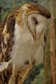 owl: what a beautiful being.