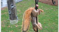 La Caisse d'Epargne rate son coup de pub en utilisant la photo d'un écureuil pendu par les testicules