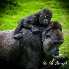 My favorite animal ever<3 Baby & mama. So cute.