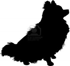 A silhouette of a sitting Pomeranian dog in profile  Stock Photo