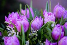 Free Image on Pixabay - Tulips, Spring Flower, Violet Free Pictures, Free Images, Happy Mother S Day, Beauty Supply, Public Domain, Spring Flowers, Rose, Plants, Girls Bedroom