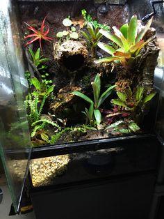 Frog Tank, Tanks, Aquarium, Goldfish Bowl, Aquarius, Fish Tank