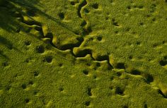 World War 1 Trench 95 Years Later.......