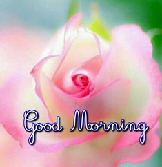 Good morning images for love Cute Good Morning, Good Morning Wishes, Good Morning Images, Good Morning Quotes, Tea Quotes Funny, Good Morning Massage, Happy Weekend Quotes, Birthday Wishes Flowers, Good Night Blessings