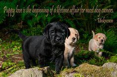Puppy Love : Retriever Life