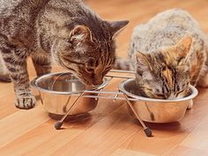Brilliant article on feeding to prevent diabetes in cats, very helpful for understanding how a cat processes protein versus carbohydrate.
