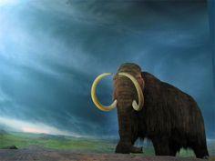 Selon une étude, les grands mammifères de la période préglaciaire, comme les mammouths, ne se nourrissaient pas de graminées mais de plantes...
