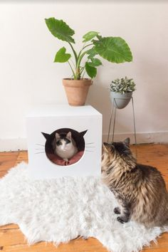 diy wood box for the cats!
