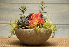Succulent mix in hypertufa pot [Molbak's]