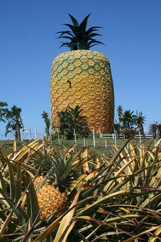 The Big Pineapple, between Port Alfred and Bathurst on the R67 in the Eastern Cape, South Africa