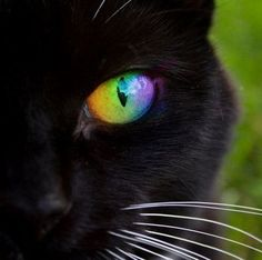 Rainbow Cat Eye by digitalsprite on deviantART Beautiful Cats, Animals Beautiful, Cute Animals, Gorgeous Eyes, Simply Beautiful, Cute Kittens, Cats And Kittens, Crazy Cat Lady, Crazy Cats