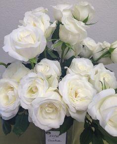 White Garden Rose Boutonniere pashmina, california grown blush pink and green garden rose | ff