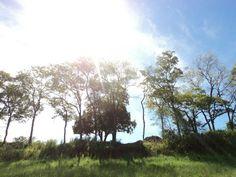 Céu, árvores, tudo lindo