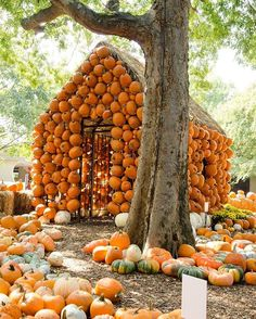 Such a perfect day for pumpkin hunting. P.S - @cheekwood is offering a buy 1 get 1 deal all weekend.  Check out some of Nashville's pumpkin patches at: visitmusiccity.com/Halloween.  #Nashville #MusicCity