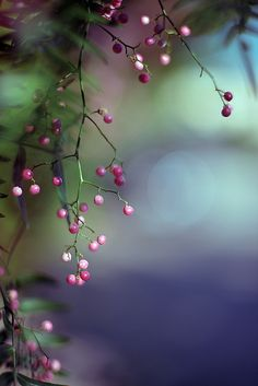 ♀ Bokeh photography plants Black Pepper Shot