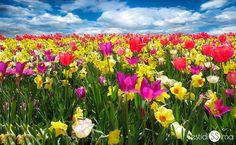 ¡Nuevo post en el Blog! ¡Flores para primavera!