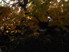 Φθινόπωρο Ηλεία