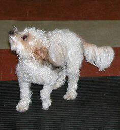 Signs of Anxiety -- Doggone Safe Dog Training School, Dog Training Classes, Signs Of Anxiety, Dog Anxiety, Dog Body Language, Dog School, Crazy Dog Lady, Dog Pin, Dog Travel